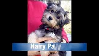 Hairy Pawter with Wag Animal Rescue | Christine Douglas