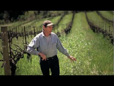 In the Vineyard- Organic Farming and Cover Crops
