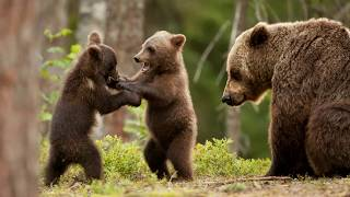"""Медведи"" - христианский слайд для детей/ МСЦ ЕХБ / слушать онлайн"