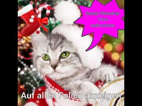 Frohe Weihnachten Katze.Katzen Wünschen Frohe Weihnachten