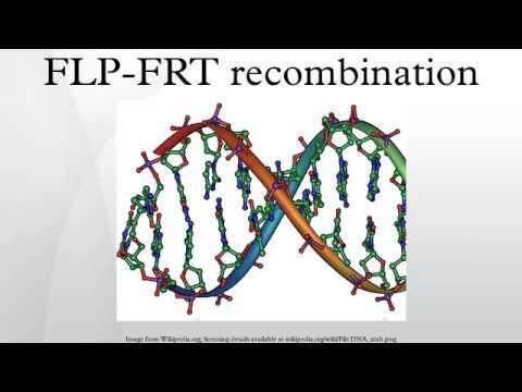 FLP-FRT recombination