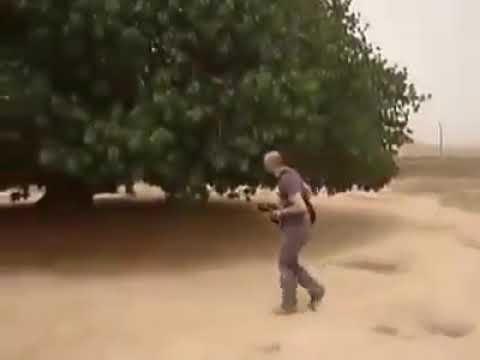 Peyğəmbər bu Ağacın Altında Dincəldikdən SONRA....