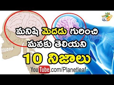 Top 10 Unknown And Mind Blowing Facts About Human Brain | మనిషి మెదడు గురించి 10 షాకింగ్ నిజాలు | CC