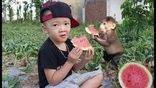 Baby Monkey | Monkey Doo And Family Eat Watemelon The Garden