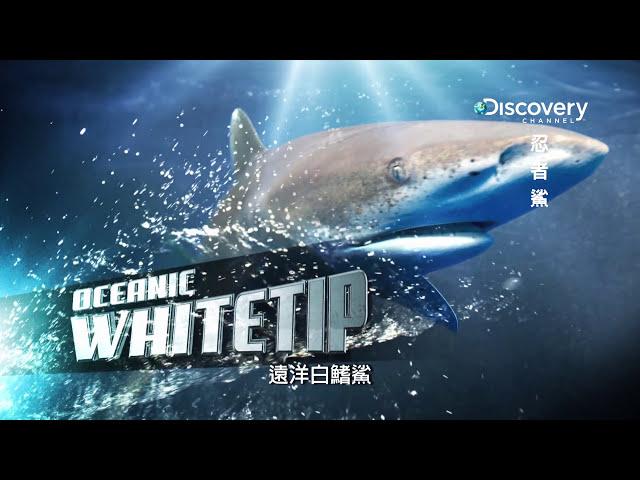 Discovery忍者鯊 004遠洋白鰭鯊是海中最美麗鯊魚之一 HD MP4檔