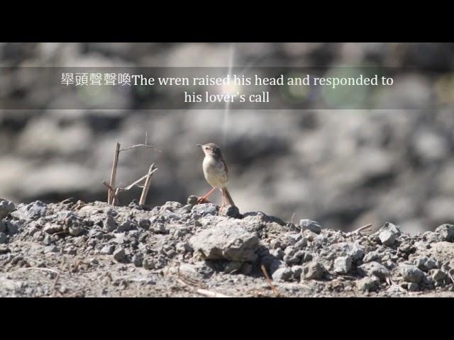茄萣濕地的--夏季風情The summer style of Qieding Wetland