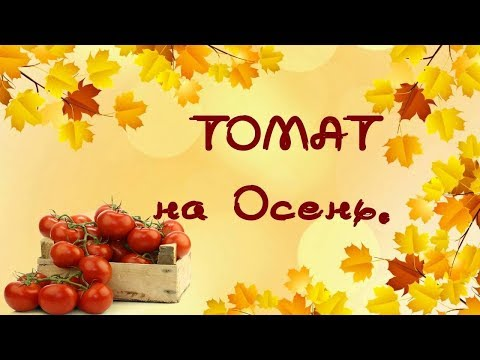 Посадка томата на осень.