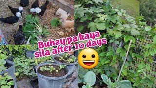 Gulay at fruit trees namin bago 10 days na bakasyon