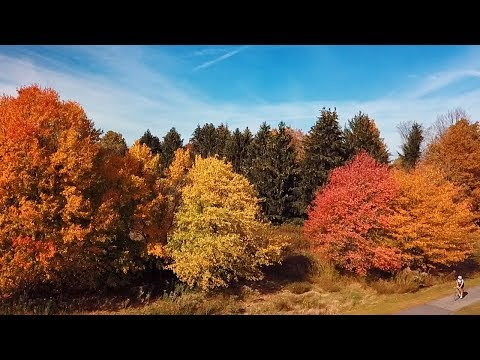 Fall foliage in Syracuse and Central New York