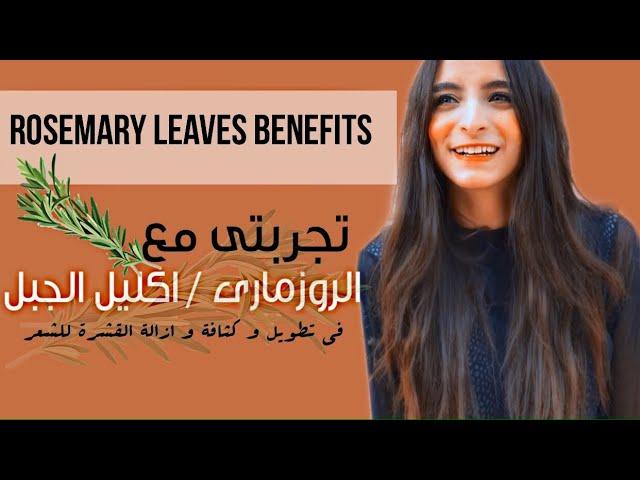 تجربتى مع الروزمارى اكليل الجبل للشعر تطويل وكثافة و علاج للقشرة Rosemary Leaves Benefits Youtube