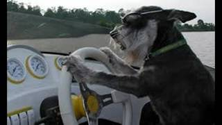 Dogs Driving Boats