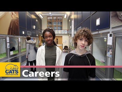 Meet a Cat Care Assistant and Media Officer – Careers with cats, episode two