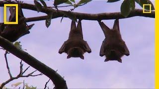 Extreme Eats: Bats