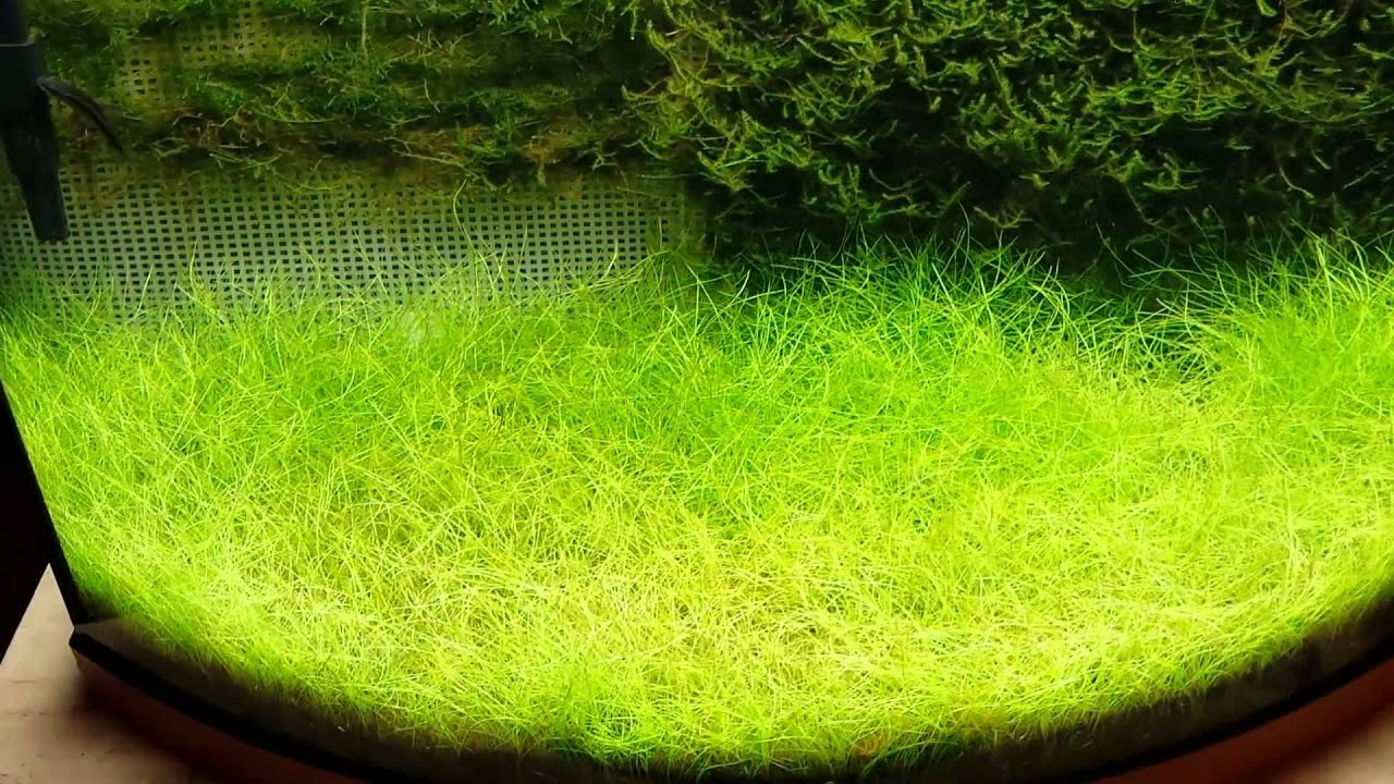 How to get moss to grow - How To Get Moss To Grow 30