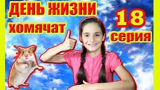 ХОМЯЧКИ | 18 ДЕНЬ ЖИЗНИ ХОМЯЧАТ | CHILD OF THE HAMSTER | Алиса Изи