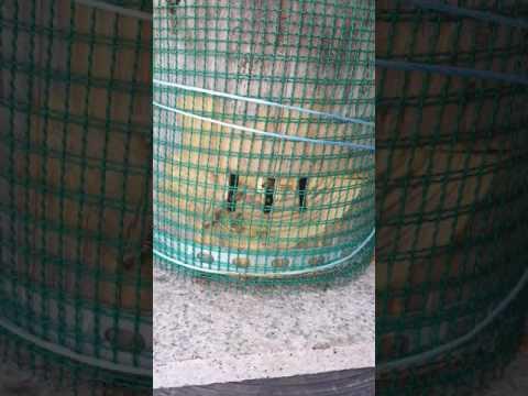 토종벌 장수말벌으로부터의 보호방법
