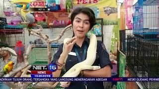 Video Live Report Pameran Flora dan Fauna 2017 - NET16 download MP3, 3GP, MP4, WEBM, AVI, FLV November 2017