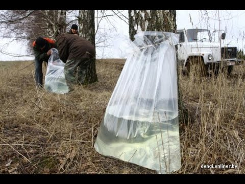 БЕРЕЗОВЫЙ СОК БЕЗ БАНОК !!! BIRCH JUICE WITHOUT THE CANS !!!know-how!!! THE RESULT TO WATCH!