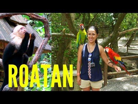 Monkey Business, Iguanas and Wildlife at Gumbalima Park - Roatan Honduras