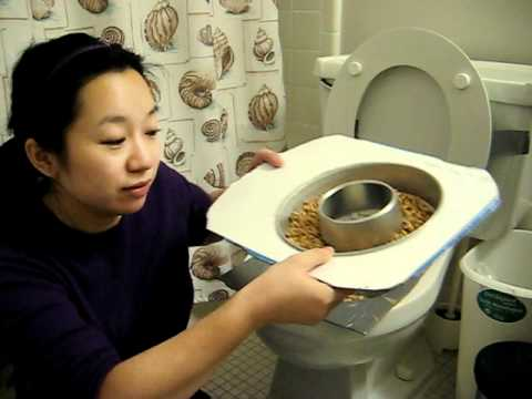 Dyi cat toilet training kit youtube for Commode kitty