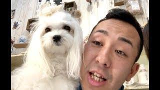 番組提供:ペットライン株式会社 http://www.petline.co.jp/ 犬種として...