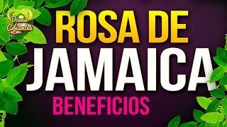 Para Que Sirve La Jamaica - Propiedades, Beneficios Y Contraindicaciones De La Rosa De Jamaica