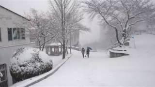 대구한의대사계절-동영상[정암의시선]