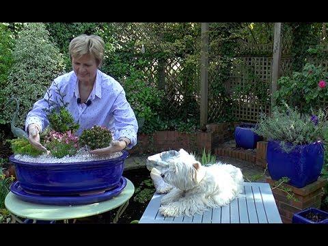 La plante zz ou zamioculcas doovi for Realiser un beau jardin