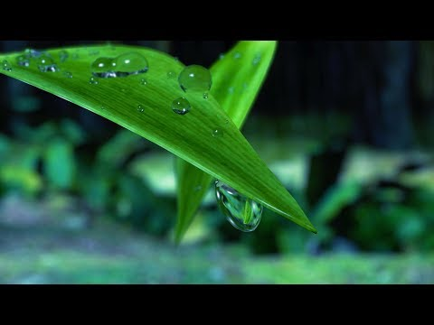 Rain at Night in Hawaii | Sleep, Study, Relax | White Noise Rainstorm Sounds