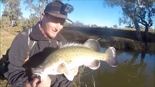 Murray Cod - Morning session ft.Clayton Mcgahan