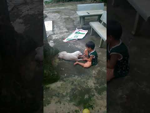 Kitty và con chó trắng - Kitty and white dog
