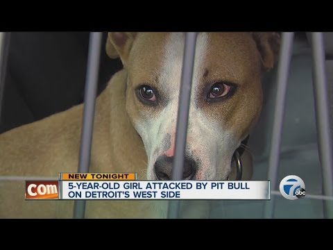 5-year-old girl attacked by pit bull on Detroit's west side
