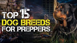 Why This Is The Top 15 Dog Breeds For Preppers To Survive The Coming Disaster