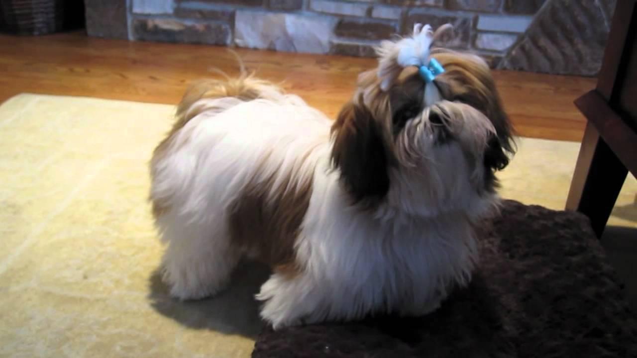 Winnie S Puppyhood 6 Months Old Youtube