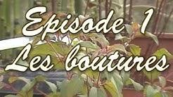 [Plantes] EP.1 - Les Boutures
