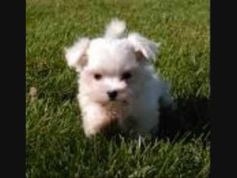 Cute Little Puppy Youtube
