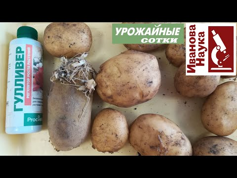 2 урожая картофеля - это реально! ИМЕННО ТАК можно получить второй урожай молодого картофеля.