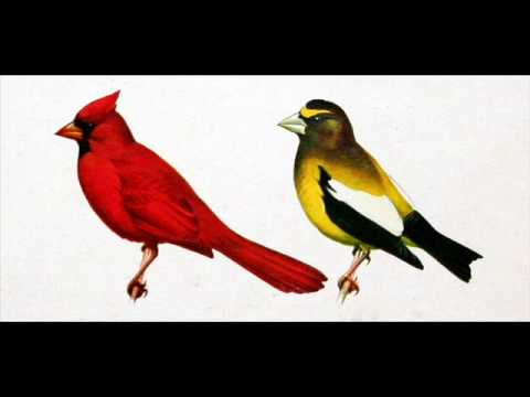 R. Tory Peterson: Audio Field Guide to Bird Songs of Eastern, Central N. America - 1961 (4 of 6)
