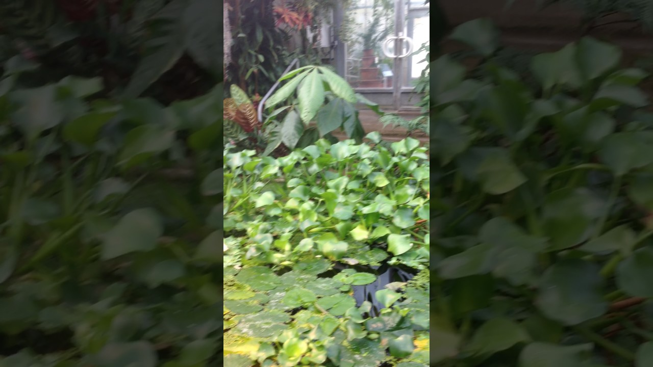 Serres jardin botanique nancy 28012017 youtube Jardin botanique nancy