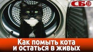 Как помыть кота и остаться в живых – видео #pro_зверьё