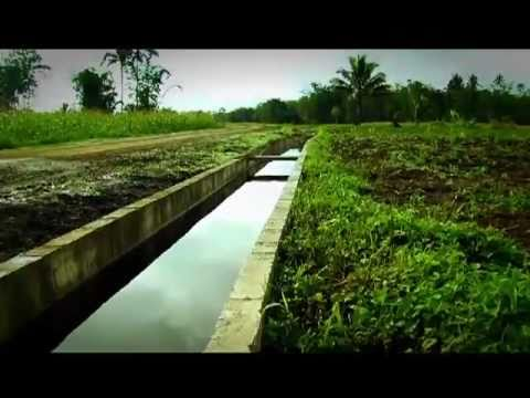 Daloy Stories - Niyakap na Kultura