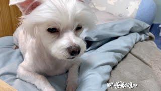 잠이 쏟아지지만 참겠다 잠을 참는 잠꾸러기 강아지