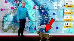 Pekka Poudan koira tunkeutuu uutislähetykseen