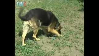 В Липецке обсуждают правила содержания домашних животных