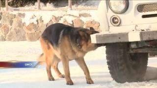 Истории и имена служебных собак