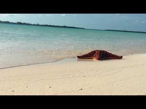 CUBA - CAYO LARGO | GoPro