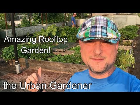 Episode 36 - Amazing Rooftop Garden! | Noble Rot | Portland, Oregon