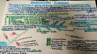 Fusarium in Hindi(wilt disease)