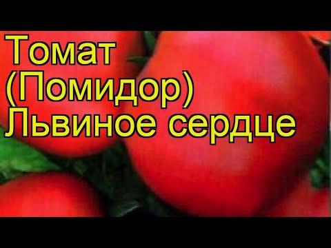 Томат обыкновенный Львиное сердце. Краткий обзор, описание характеристик, где купить семена