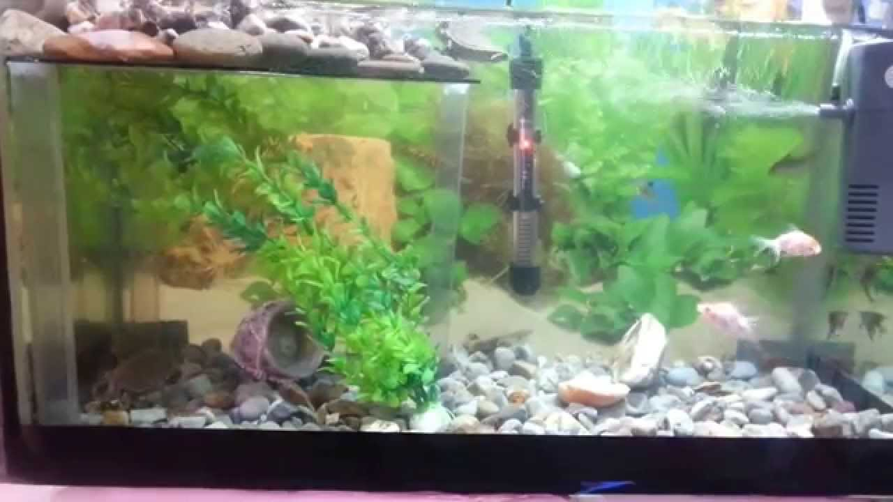 Mi acuario de peces y tortugas youtube for Acuario tortugas